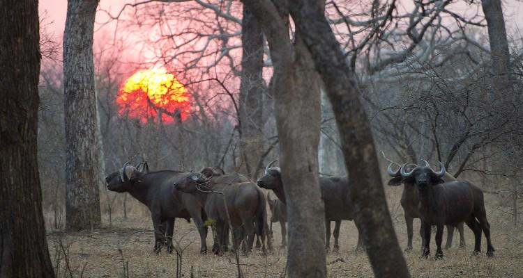 Explore the Wildlife of Malawi
