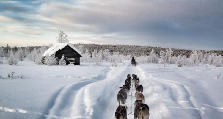 Go dog sledding in a winter wonderland