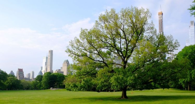 Have a picnic in Central Park